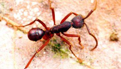 Nunca imaginarás cómo viaje esta nueva especie de escarabajo