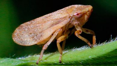 Bacteria amenaza la industria de la oliva
