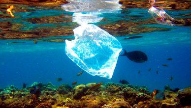 degradarse los desecho
