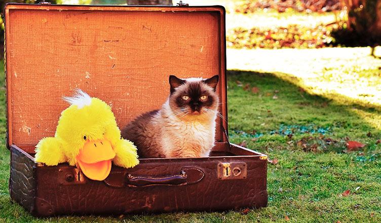 Lo que todo dueño de gatos debe saber antes de viajar con mininos.