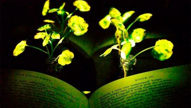 Crean plantas luminosas que podrían reemplazar la luz eléctrica.