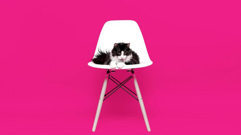 Lo que todo dueño de gatos debe saber antes de viajar con mininos